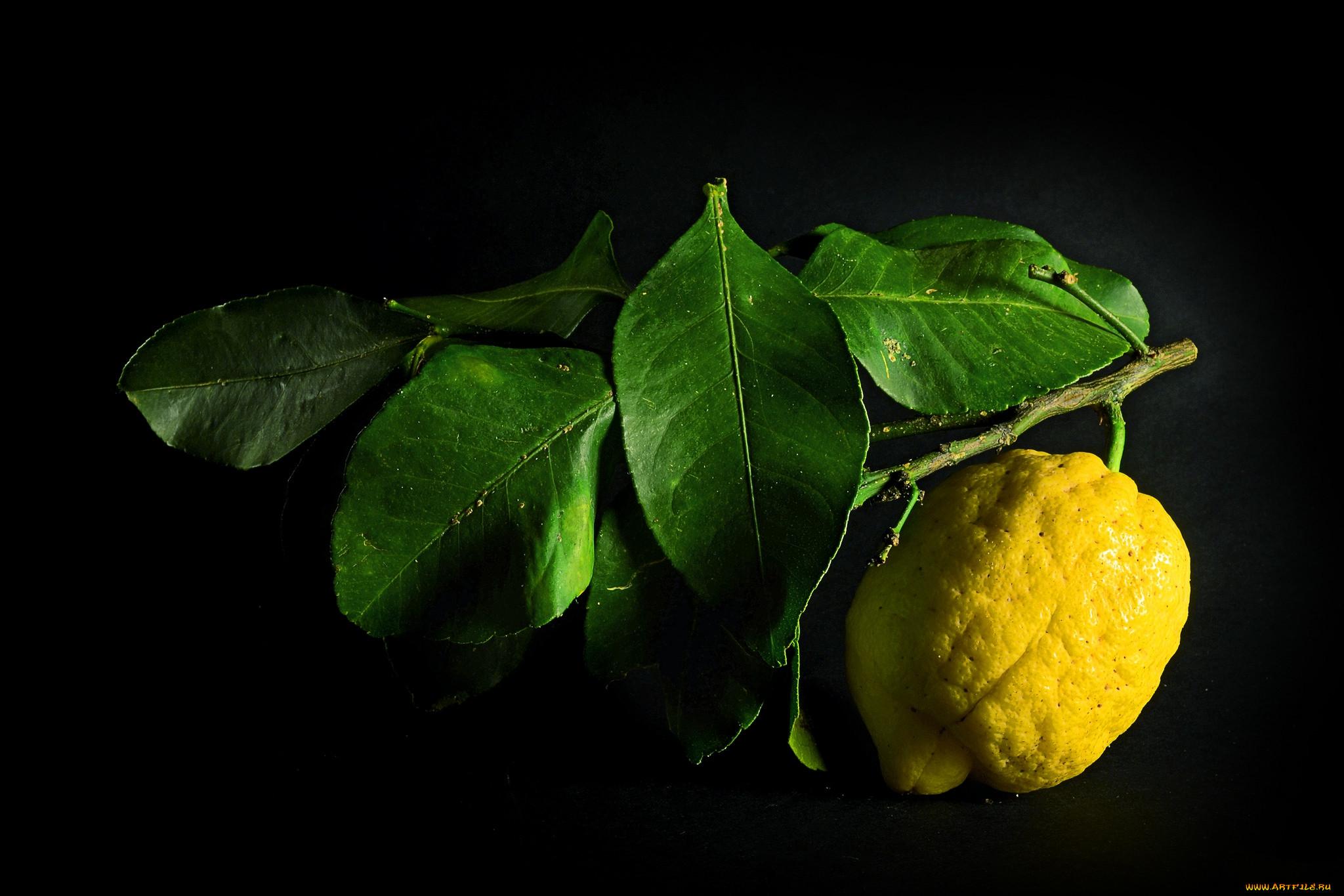 Современная расцветка линолеума фото фотошопе обычного